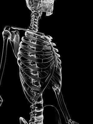 Backbone Photograph - Human Ribcage by Sebastian Kaulitzki