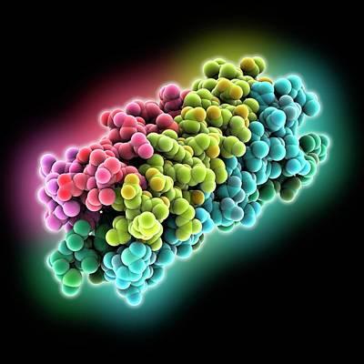 Human Rotavirus Enterotoxin Art Print by Laguna Design