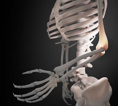 Skeleton hand art page 3 of 23 fine art america skeleton hand photograph human skeletal system by andrzej wojcicki ccuart Choice Image