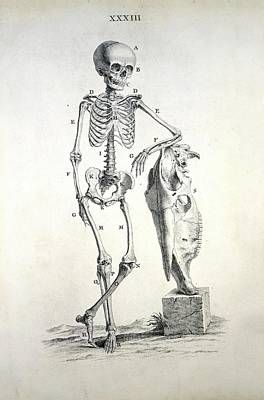 Human Skeleton Art Print by British Library