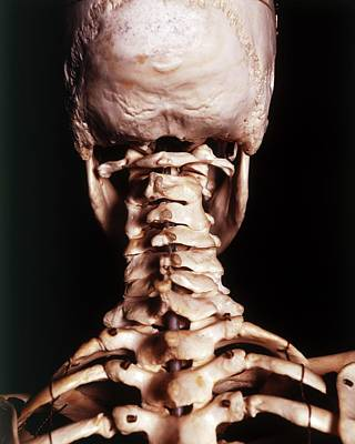 Deaths Head Photograph - Human Skeleton by Dorling Kindersley/uig