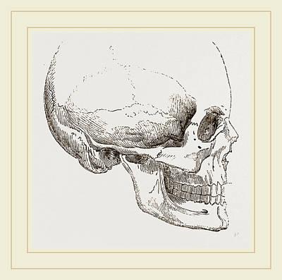 Human Skull Drawing - Human Skull by Litz Collection