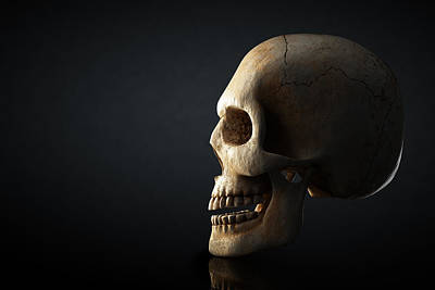 Still Life Royalty-Free and Rights-Managed Images - Human skull profile on dark background by Johan Swanepoel