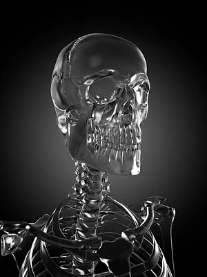 Human Skull Rendered In Glass Art Print by Sebastian Kaulitzki/science Photo Library