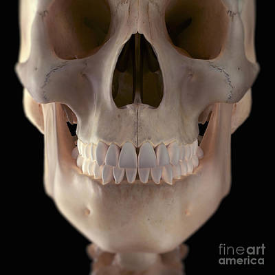 Aperture Photograph - Human Skull by Science Picture Co