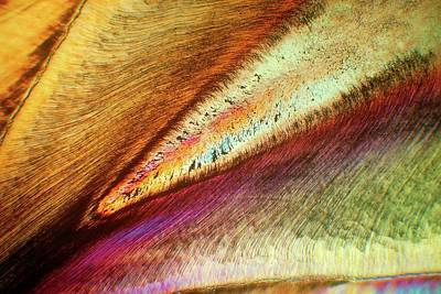 Microscopic Photograph - Human Tooth by Steve Lowry