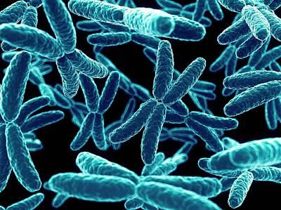 Chromosome Photograph - Human X Chromosomes by Sebastian Kaulitzki