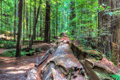 Photograph - Humboldt Redwoods by Heidi Smith