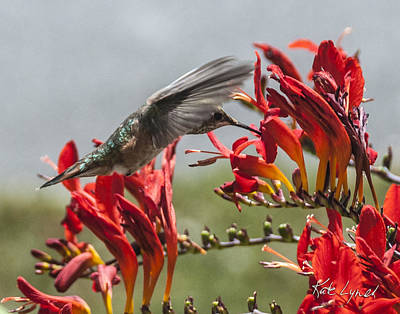 Photograph - Hummer Ballet by Kate Lynch