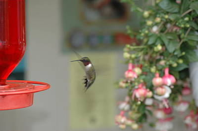Photograph - Hummer by David Armstrong