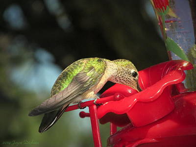 Photograph - Hummer Enjoying The Nectar by Joyce Dickens