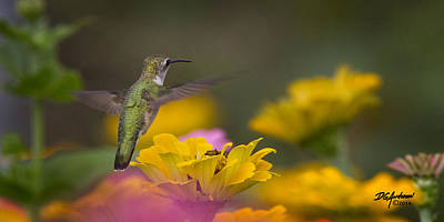 Photograph - Hummer Hovering by Don Anderson