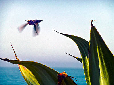 Photograph - Hummer In Flight 1 by Marie Morrisroe