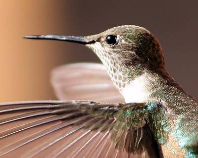 Hummer On The Wing Art Print