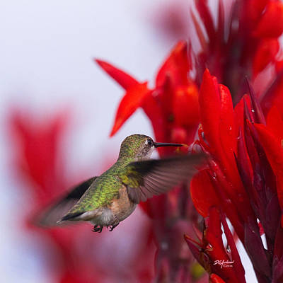 Hummer With Red Original by Don Anderson