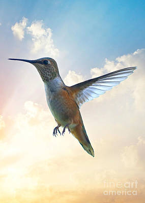 Photograph - Humminbird Sky 2 by Carol Groenen