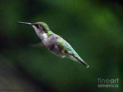 Photograph - Humming Along by Gena Weiser