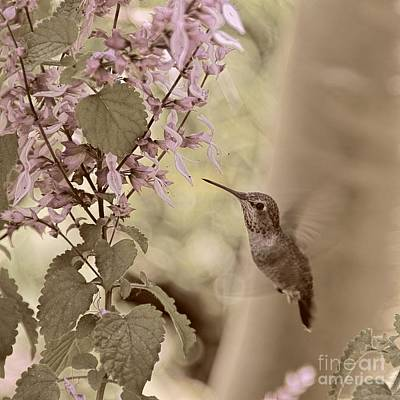 Photograph - Humming Along by Peggy Hughes