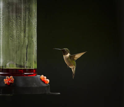 Photograph - Humming Around by Linda Tiepelman