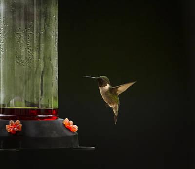 Photograph - Humming Around by Linda Tiepelman
