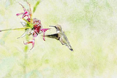 Humming Bird And Flower Art Print