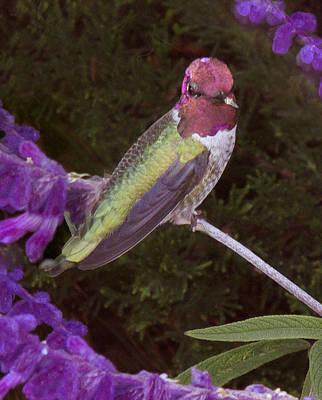 Photograph - Humming Bird by Derek Dean