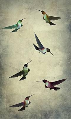 Humming Bird Textured Art  Art Print