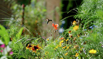 Art Print featuring the photograph Humming Bird by Thomas Woolworth