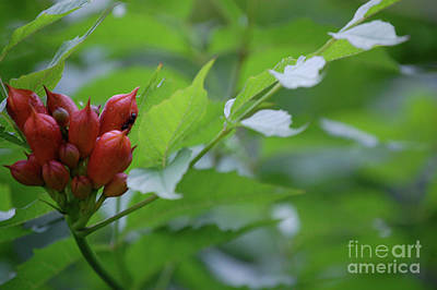 Photograph - Humming Buds By Jammer by First Star Art