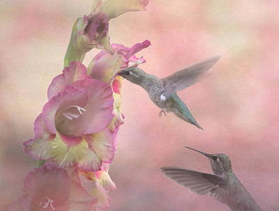 Humming Gladiola Art Print by Angie Vogel