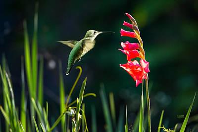 Photograph - Hummingbird 1 by Steven Llorca