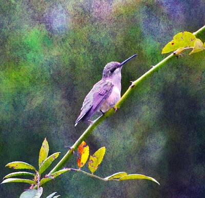 Photograph - Hummingbird 2 by Deena Stoddard
