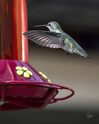 Photograph - Hummingbird 2 by Endre Balogh
