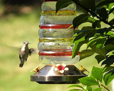 Art Print featuring the photograph Hummingbird - 2 by Teresa Schomig