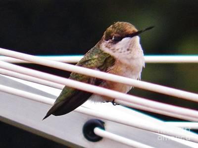Photograph - Hummingbird 3 by Judy Via-Wolff