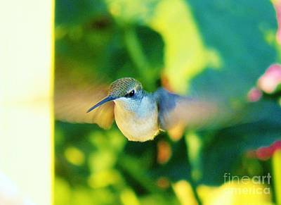 Photograph - Hummingbird 5 by Judy Via-Wolff