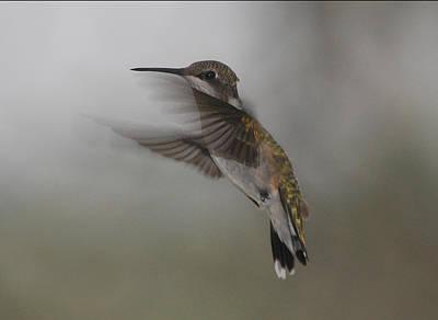 Art Print featuring the photograph Hummingbird 6 by Leticia Latocki