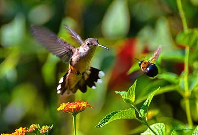 Hummingbird And A Bumblebee 001 Art Print