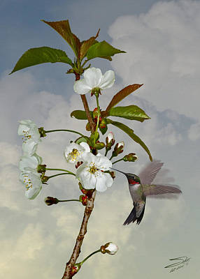 Tree Blossoms Digital Art - Hummingbird And Apple Blossom by IM Spadecaller