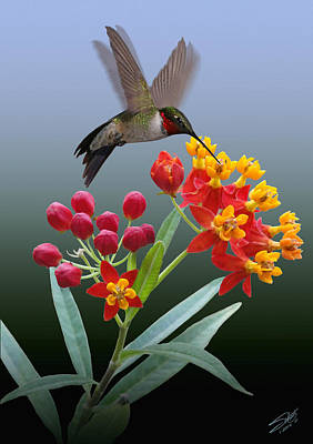 Digital Art - Hummingbird And Mexican Butterfly Weed by IM Spadecaller
