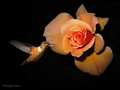 Hummingbird And Orange Rose Art Print