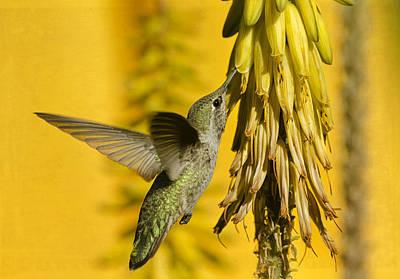 Photograph - Hummingbird And The Aloe Blooms by Saija  Lehtonen