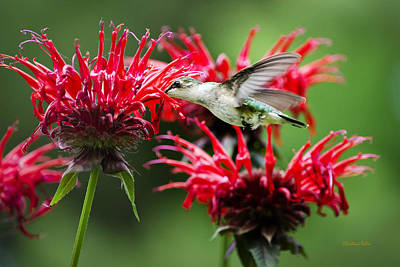 Hummingbird Angel Art Print