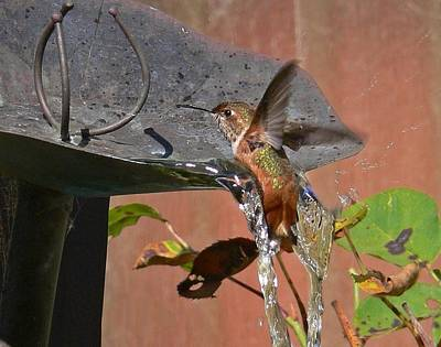 Photograph - Hummingbird Bath  by Gracia  Molloy