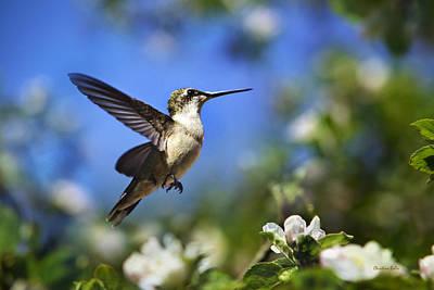 Photograph - Hummingbird Beauty In Flight by Christina Rollo