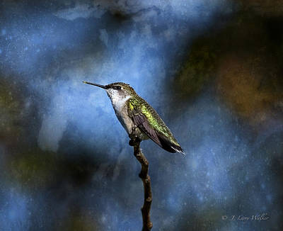 Print featuring the digital art Hummingbird Beauty by J Larry Walker