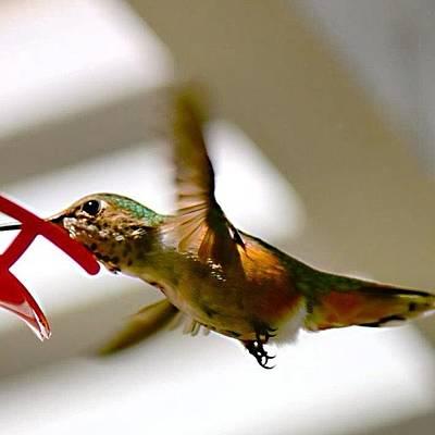 Ornithology Photograph - #hummingbird #bird #nature by Mark Jackson