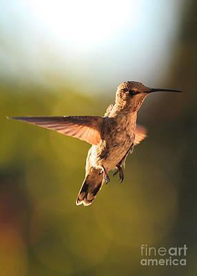 Photograph - Hummingbird Bokeh by Carol Groenen