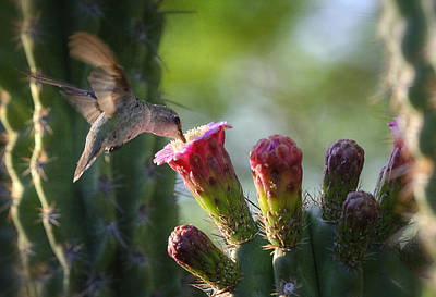 Hummingbird Breakfast Southwest Style  Art Print