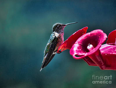 Photograph - Hummingbird Cafe by Brenda Kean